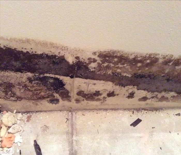 How to get rid of mold in your home? Before