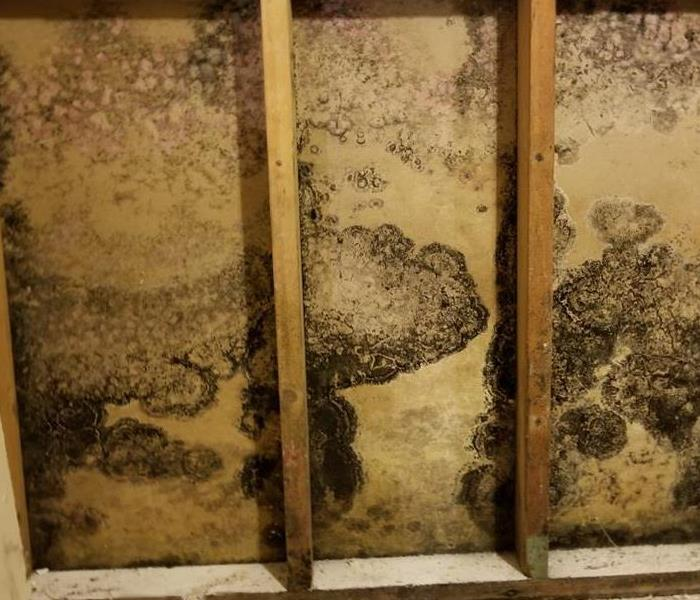 Mold Remediation Mold Cleanup 101